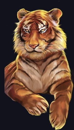 wild cats tiger